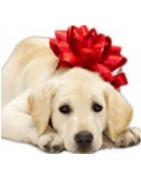 Cadeaux de Noel pour les chiens