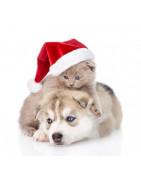 Des friandises de Noel pour votre animal de compagnie