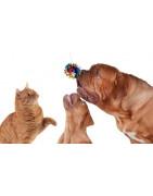 Jouet pour chiens et chats en promo