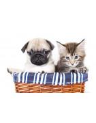 Les accessoires pour chiens et chats à prix mini