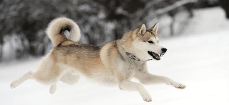 Votre chien fugue, que faire?