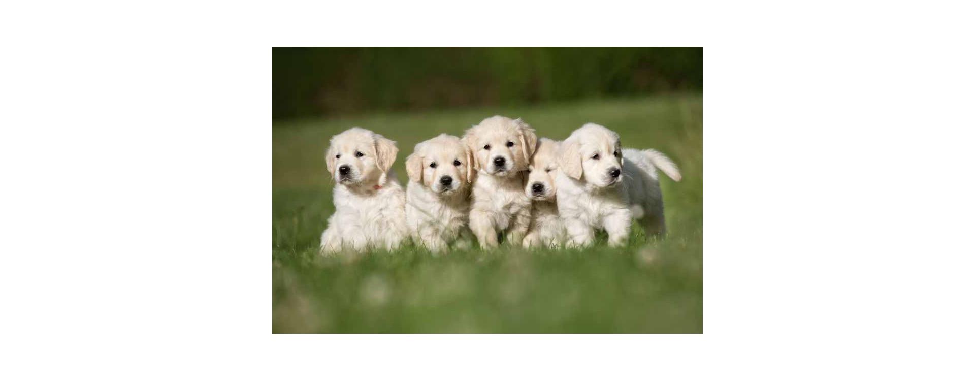 L'élevage canin et félin