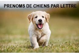 Noms de chiens par lettre