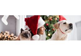 Vos préparatifs de Noël